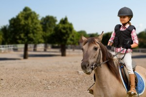 Should You Buy or Lease a Horse?