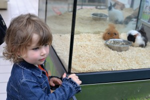 Pet Shop Activities for Kids