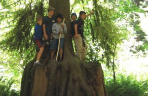 kids on a giant tree in big sur