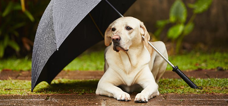 puppy under an umbrella - rained out