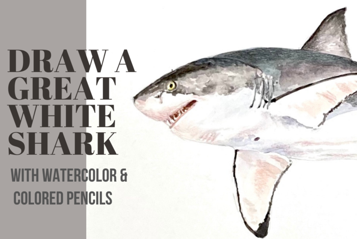 On-Demand Art Classes for Kids - Learn to Draw a Great White Shark with watercolor and colored pencils on ActivityHero